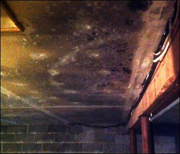Removal and Treatment of Hazardous Basement Mold Contamination Before New Rebuild, Rutherford, NJ Before