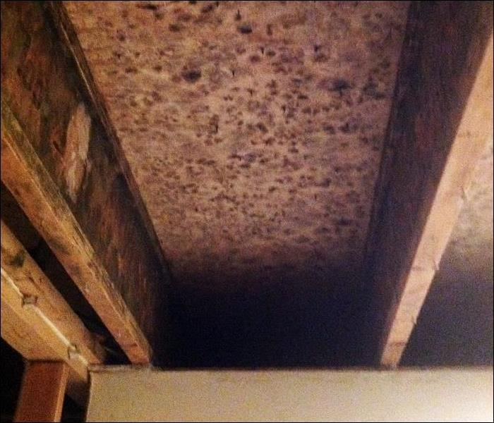 Excessive Moisture Caused Formation of Mold on Wooden Ceiling Joists, North Haledon, NJ Before